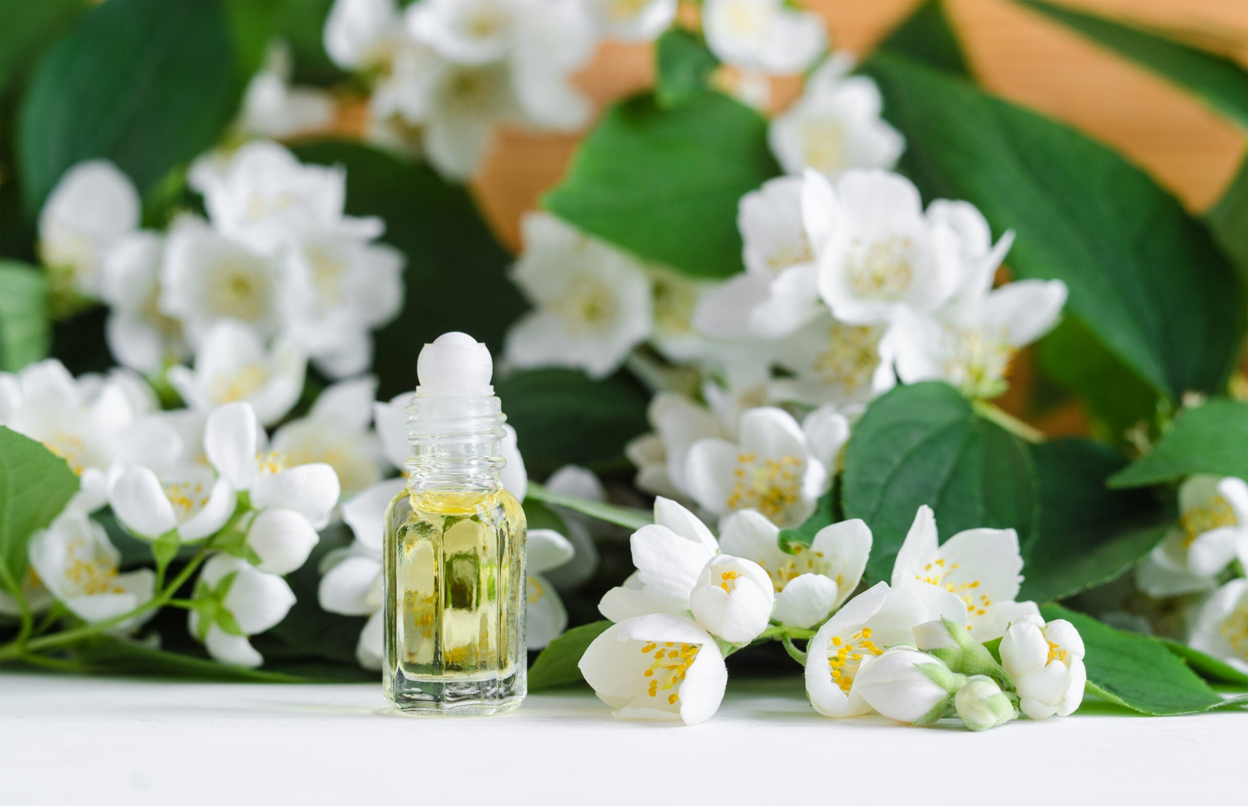 Small glass bottle with natural jasmine roll on perfume oil. Jasmine blossom flowers background. Copy space.