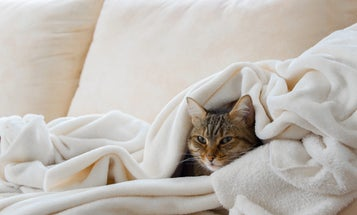 The Best Blankets to Snuggle Up Under Tonight