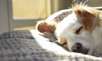 How to Pick the Perfect Dog Bed for Your Pooch