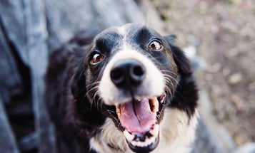 3 Top Hip and Joint Supplements for Dogs