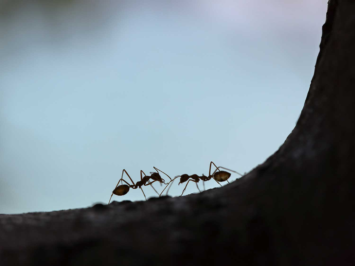 Ants climbing up anthill