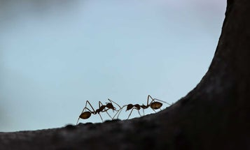 Three Things to Know About Ant Killers, Traps and Poisons Before You Buy