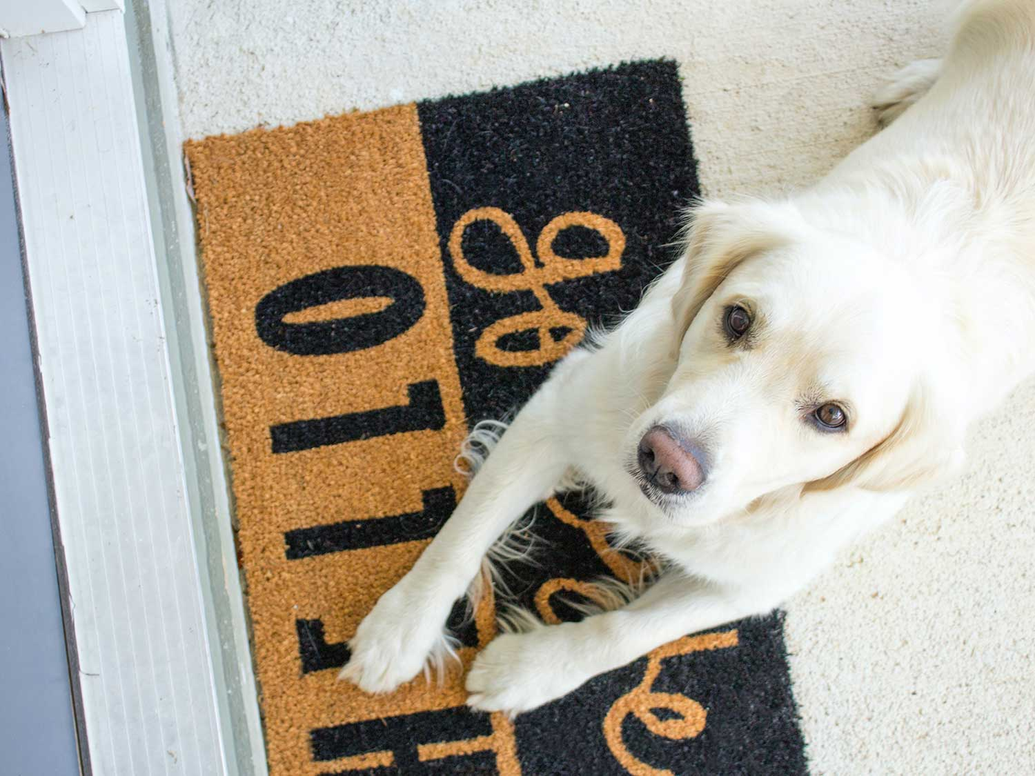 Dog sitting on top of welcome mat at front door.
