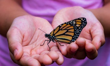 Play Better: Three Things to Know About Butterfly Growing Kits for Kids