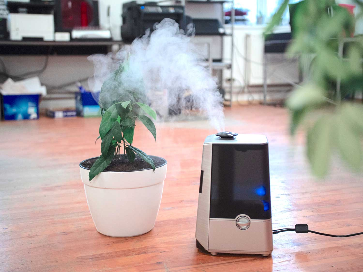 Air humidifier with plant in office.