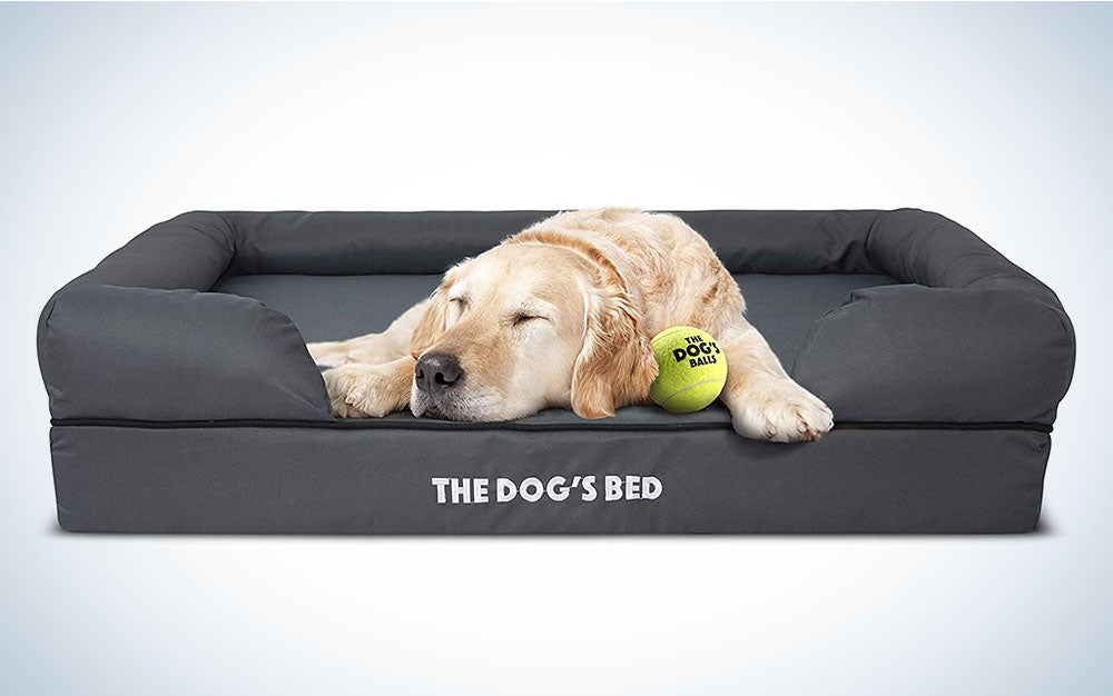 dog on a comfy bed