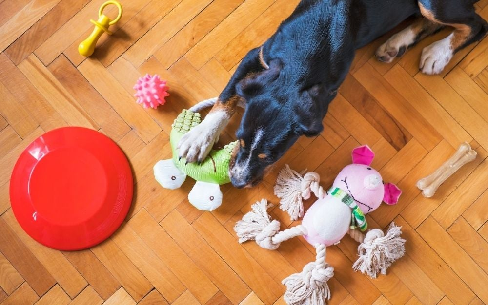 Dog playing with different dog toys.